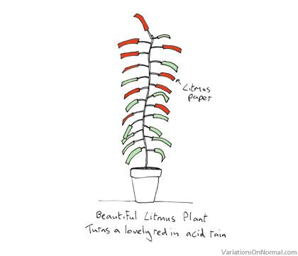 Litmus Plant