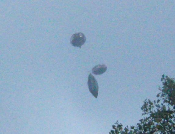 会飞的气球驾驶员多米尼克·威尔科克斯bob游戏竞猜